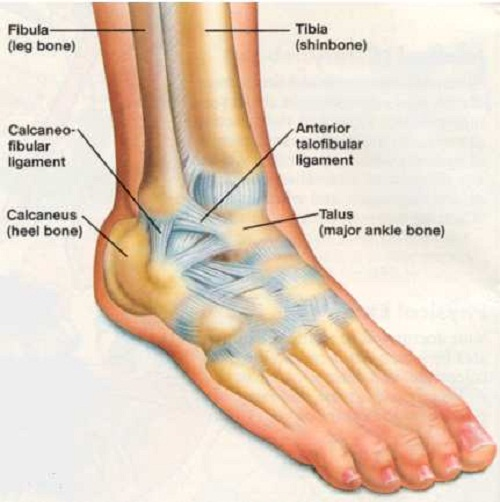 Ankle Injury Physio Dublin Laurel Lodge Physiotherapy Dublin 15